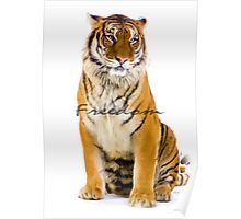 Tiger Freedom Poster