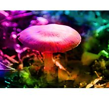 Trippy Nature - Colorful Mushroom  Photographic Print
