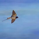 Swallow flight by M.S. Photography/Art