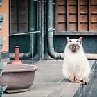 Cat, Adso, Temple by Gorma Kuma