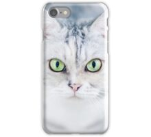 Silver Cat, Close Up, Looking iPhone Case/Skin