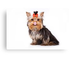 Funny shaggy dog puppy Yorkshire Terrier Canvas Print