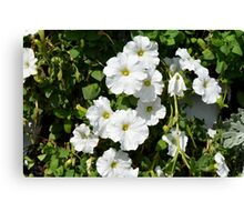 White calm flowers in the garden. Canvas Print