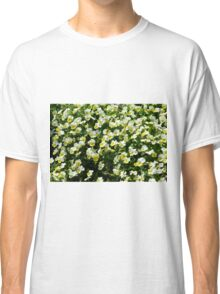 Many small beautiful yellow white flowers in the park. Classic T-Shirt