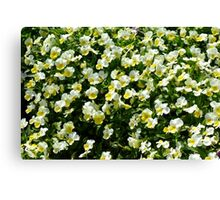 Many small beautiful yellow white flowers in the park. Canvas Print