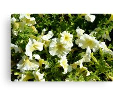 Beautiful yellow sunny flowers in the garden. Canvas Print