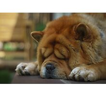 Dog's leisure time Photographic Print