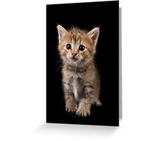 Charming fluffy ginger kitten on a black background Greeting Card