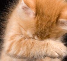 Charming fluffy ginger kitten on a black background Sticker