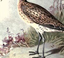 Familiar wild birds Swaysland 1883 V2 151 Sticker