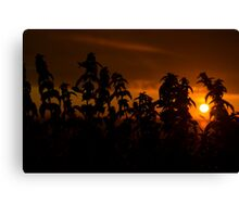 beautiful sunset through the wild nettles Canvas Print