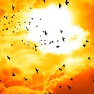 birds flying into a bright orange sunset by morrbyte