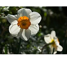 Spring Sunshine and Blooms Photographic Print
