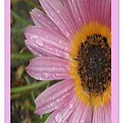 Daisy Face (iPhone Case) by judygal