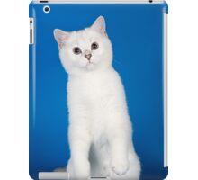 Charming cute white fluffy kitten cat iPad Case/Skin