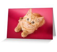 Charming fluffy red kitten British cat Greeting Card