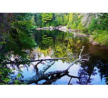 """Deep Woods, Ontario"" Photographic Print"