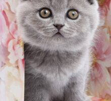 Charming fluffy kitten British cat Sticker