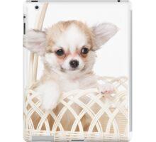 Cute fluffy white dog puppy chihuahua iPad Case/Skin