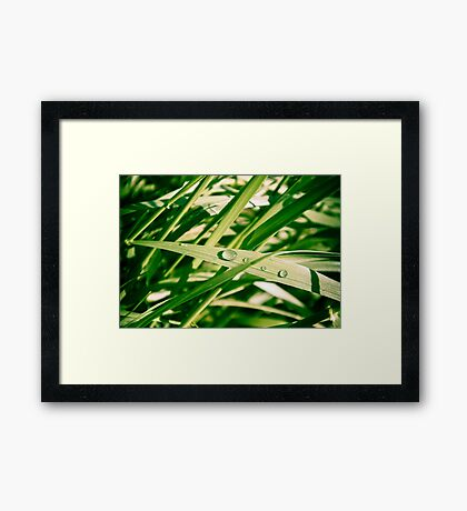 Water drops on Grass Framed Print