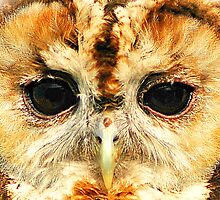 Tawny Owl - Up close and personal by Anthony Hedger Photography