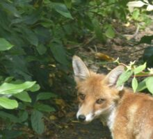 The Curious Fox Sticker