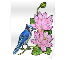 Blue jay and lotus flowers Poster