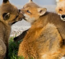 Red Fox Vixen and Two Kits Sticker