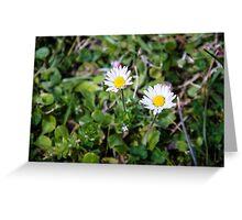 Daisy Flowers Greeting Card