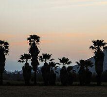 Palms At Dusk by heatherfriedman