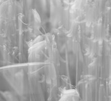 A Peek Behind The Curtain - Black and White by MotherNature2