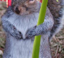 Spring Squirrel Sticker