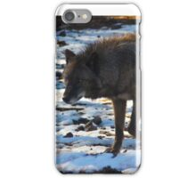 """""""Timber Wolf on the Prowl"""" iPhone Case/Skin"""