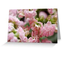 Tiny Pink Flowers Greeting Card