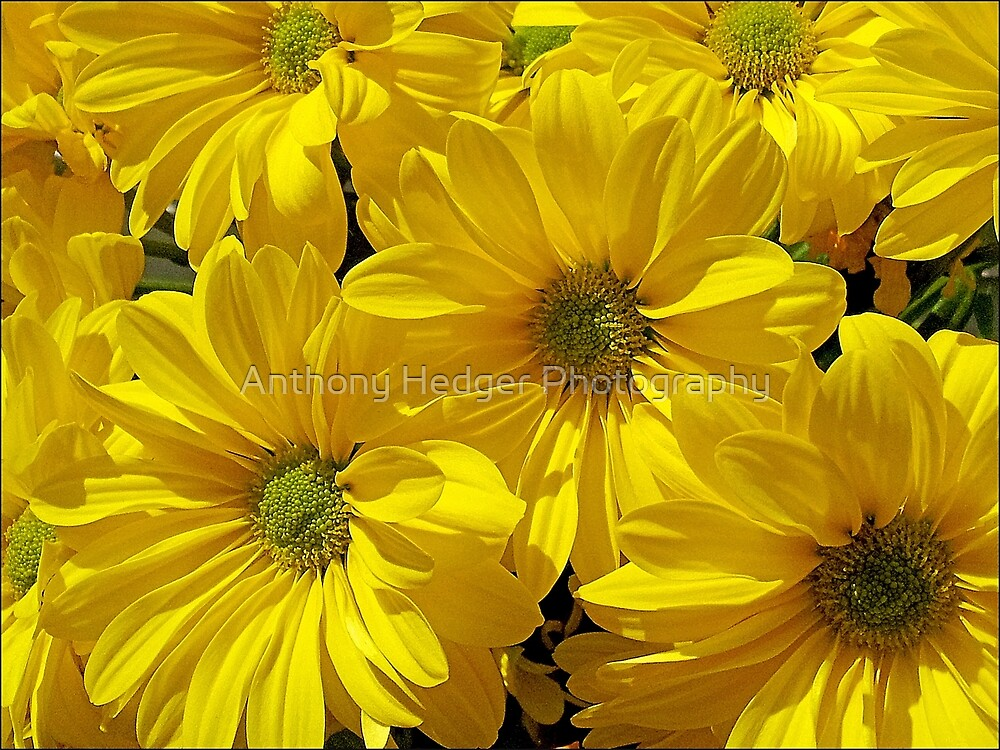 Flower Power by Anthony Hedger Photography
