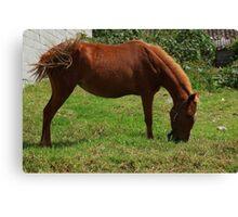 Brown Horse on a Farm Canvas Print