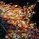 0043 Autumn Leaves by DavidsArt