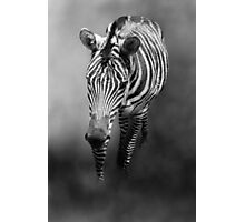 Zebra Out of the Mist Photographic Print