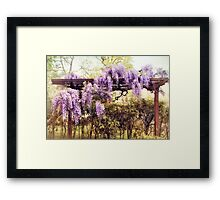 Waning Wisteria Framed Print
