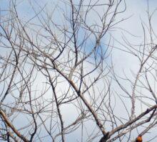 War of the Birds Sticker