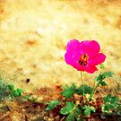 Earth Laughs in Flowers... by Denis Marsili