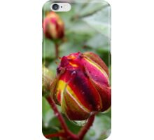 rose buds in the rain iPhone Case/Skin