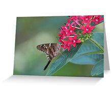 Butterfly on a Red Flower Greeting Card