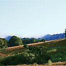 San Rafael Hills by Polly Peacock