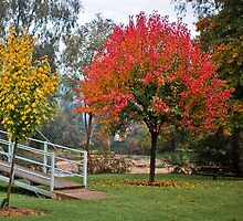 0041 Autumn Colours by DavidsArt