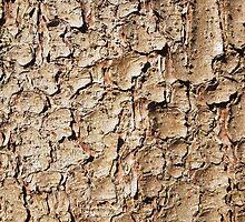 Wood 4 by Jan Vinclair