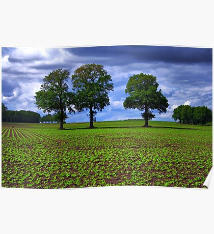 A Green Field & Dramatic Sky Poster
