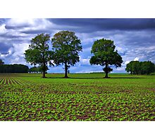 A Green Field & Dramatic Sky Photographic Print