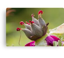 dried peony in the gardendried peony in the garden Canvas Print