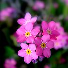 Innocents in pink by Eugenio